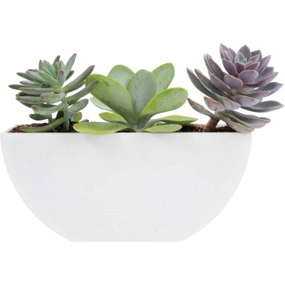 Bloem Bodye Half Moon 11 In. x 3.75 In. Plastic White Planter